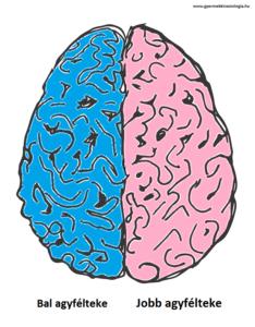 edu-kineziologia-agy